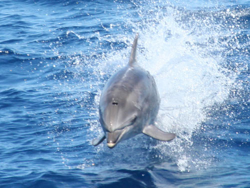 Dolphin and whale watching in Gibraltar