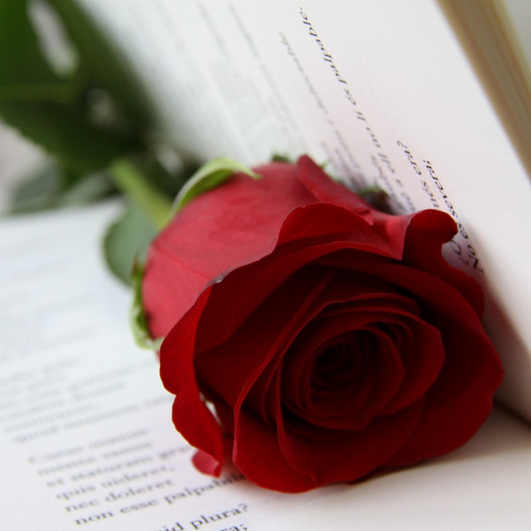Books and Roses to celebrate St Jordi 2014 in Barcelona