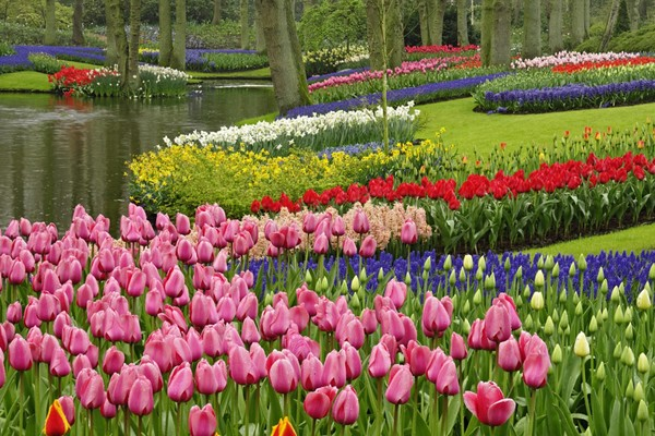 Keukenhof Gardens in Bloom for 2014